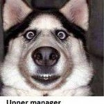 Alaska Husky Face Meme